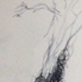 A pen and water drawing of a tree branch